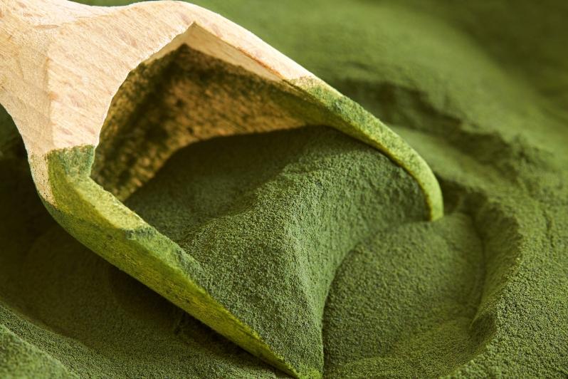 Chlorella Algae Powder